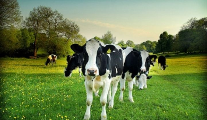 Low-Emission Yogurt From Grass-Fed Cows